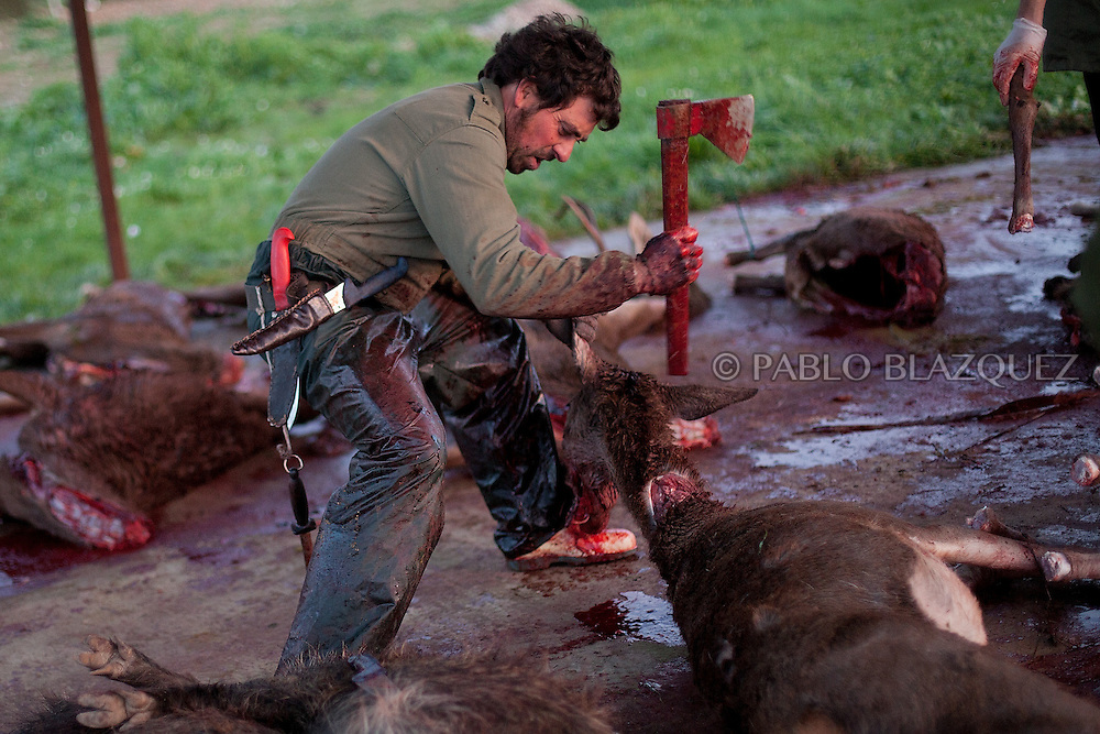 A butcher prepares the dead deers after a hunting session, in Carbajo on January 19 2013, in Caceres Province, Extremadura, Spain. .Caceres has a well preserved natural environment. Plenty of its surface is dedicated to deers and wild boars hunting, making this, an important part of its economy. But most of the land belongs to large landowners. .In Carbajo, people gather three times a year to hunt deers and wild boars. In the past, they used to hunt for eating, but now days, they practice it as an sport and a social event. Then, they sell what the catch as wild game meat.