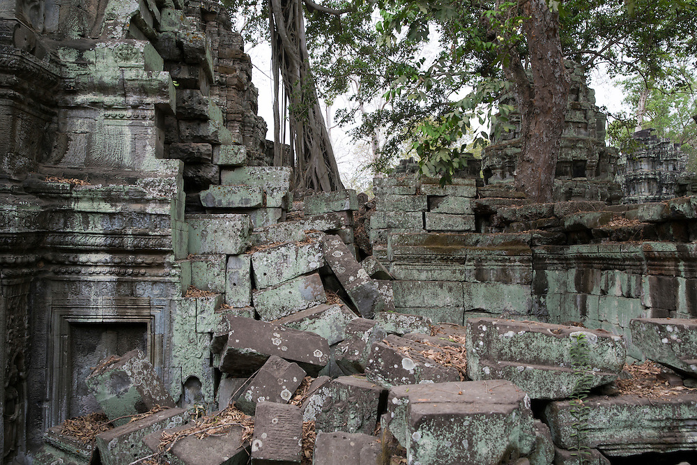 Silk-cotton trees, Ceiba pentandra, grows around an ancient ruin of the Ta Prohm temple, known as the jungle temple, in Angkor region Siem Reap Province, Cambodia, South East Asia.  The stone wall is decorated with beautiful stone carvings in Bayon style.  (photo by Andrew Aitchison / In pictures via Getty Images)