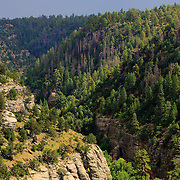The afternoon sun glistens on the tree tops of Walnut Canyon
