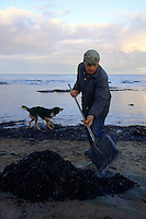 Collecting sea coal. Sea coal is coal washed up on beaches either from exposed undersea seams or waste dumped in the sea from collieries in the North East of England ....