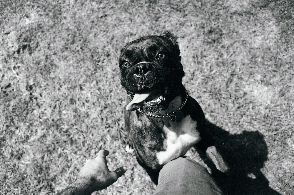 Ruby the dog expresses herself on the photographer's leg.