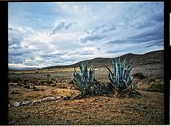 Cabo de Gata,Andalucia,Spain<br /> The desert in Almeria.<br /> &copy;Carmen Secanella