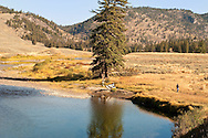 Hiking, Yellowstone National Park, Slough Creek, Wyoming, MODEL RELEASED