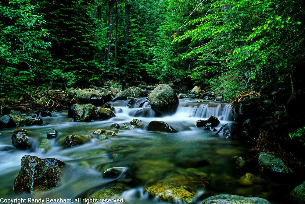 North Creek, Yaak Valley, northwest Montana.