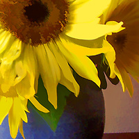 Several sunflowers displayed in a blue vase, on a table, in front of a textured wall.