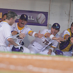 09 June 2008:  Ryan Schimpf #16 is congratulated by teammates in the dugout after his leadoff homerun in the bottom of the 5th inning that extended LSU's lead to 10-2 over UC Irvine. The LSU Tigers advanced to the College World Series with a 21-7 victory over the UC Irvine Anteaters in game three of the NCAA Baseball Baton Rouge Super Regional Alex Box Stadium in Baton Rouge, LA..