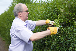 Man using clippers to tidy up a hedge,