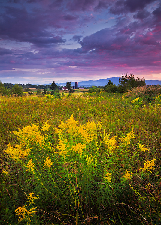 Sunset light and golden rod over northern Vermont farm fields, North Hyde Park