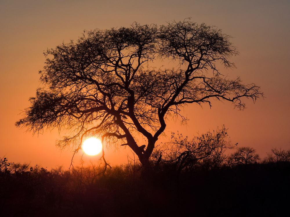 Sunrise at Kruger NP, South Africa