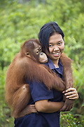 Bornean Orangutan<br /> Pongo pygmaeus<br /> Juvenile (approx. 5 years old) riding on caretaker's back <br /> Orangutan Care Center, Borneo, Indonesia<br /> *No model release available - for editorial use only