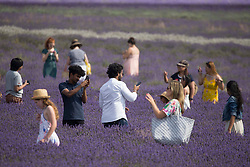 © Licensed to London News Pictures. 10/08/2020 Hitchin, UK. Members of the public enjoy the sunny weather at Lavender Farms Hitchin, Hertfordshire. The farm hopes to start the harvest this week. Temperatures have reached 34 degrees in parts of the south today. Photo credit: Marcin Nowak/LNP