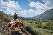 Woman backpacking with her dogs through Leavitt Meadows, Humbolt-Toiyabe National Forest, California