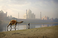 An Indian boy and his camel pass through the Yamuna River at sunrise. Agra, Uttar Pradesh, India.