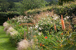 The bronze border at Holt Farm with Eremurus × isabellinus 'Cleopatra', Stipa gigantea, Stipa tenuissima, Hemerocallis 'Stafford', Euphorbia griffithii, Rosa 'Buff Beauty' and Digitalis parviflora
