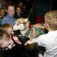 Edrington Group Childrens Christmas party  19.12.02<br />The huskies having fun with the children<br /><br />Pic by Graeme Hart<br />Copyright Perthshire Picture Agency<br />Tel: 01738 623350 / 07990 594431
