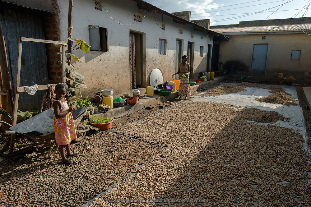 Farida Bikobere (5, at left) in the courtyard of her home near Tororo, Uganda on 2 August 2014, where piles of groundnuts have been laid out to dry in the sun after being harvested.