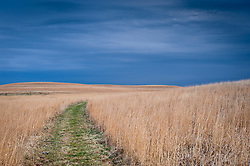 An early morning storm encroaches  the rolling hills of the nearly 11,000 acre Tallgrass Prairie National Preserve in the Flint Hills of Kansas in Chase County near the towns of Strong City and Cottonwood Falls. Less than four percent of the original 140 million acres of tallgrass prairie remains in North America. Most of the remaining tallgrass prairie is in the Flint Hills in Kansas.  Tallgrass Prairie National Preserve is the only unit of the National Park Service dedicated to the preservation of the tallgrass prairie ecosystem. The Tallgrass Prairie National Preserve is co-managed with The Nature Conservancy. Pictured is a trail in the West Traps Pasture of the preserve, near trail marker 15 and the Lower Fox Creek Schoolhouse.