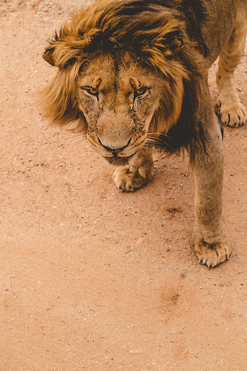 Mike Fell Photography Limited Edition Prints of Wildlife and Portraits