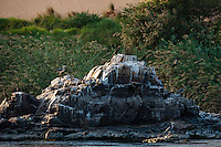 Egypt. Aswan stands on the east bank of the Nile. Cormorants.