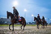 November 1-3, 2018: Breeders' Cup Horse Racing World Championships. Athena (IRE)