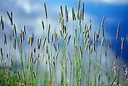 reeds, Colorado