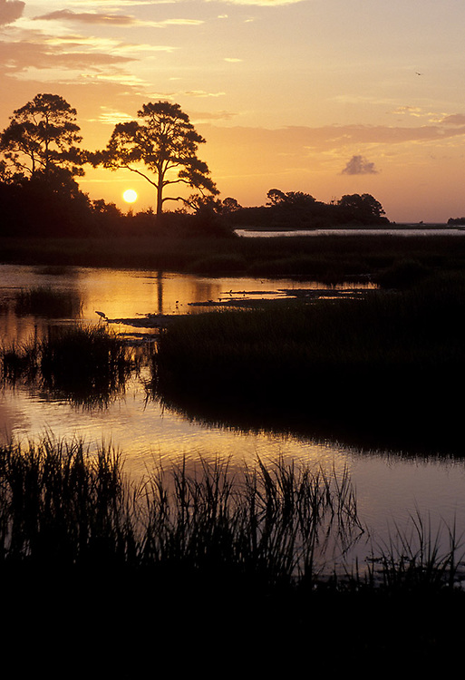Cedar Key Swamp Sunset/sunrise