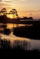 Cedar Key Swamp Sunset/sunrise