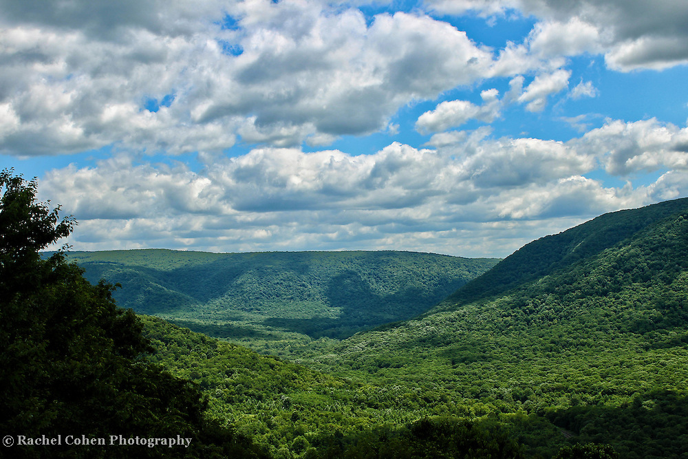 &quot;Carved&quot;<br />