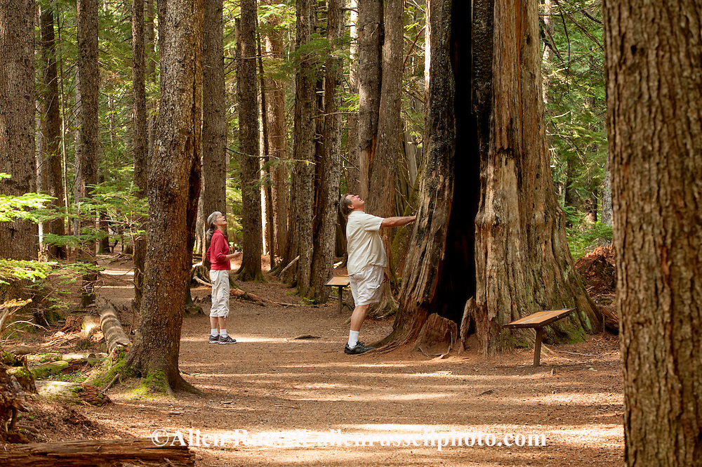 Ross Creek Cedars Scenic Area, Montana, Western Red Cedars, tourists, couple