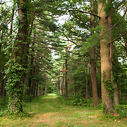 A sublime forest road traverses the Appleton Farms & Grass Rides in Ipswich, MA