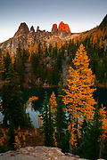 Golden Larch trees (Pseudolarix amabilis) at the peak of their fall color surround Blue Lake near Washington Pass in the North Cascades of Washington state. Golden Larches, while not considered true larches, are known for shedding their needles each fall. The needles grow back each spring and transition from deep green to blue green over the course of the summer. In late September or early October, the needles turn golden and drop, just like the leaves on deciduous trees. Several peaks are visible above the lake. From left to right, the peaks are Liberty Bell and the Early Winters Spires.