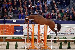 195, Khan<br /> KWPN Stallionshow - 's Hertogenbosch 2018<br /> © Hippo Foto - Dirk Caremans<br /> 31/01/2018