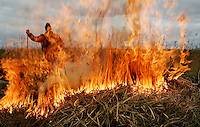 SINT JANSKLOOSTER -Een rietsnijder verbrandt het vuil dat tussen het gesneden riet zat.<br />  KOEN SUYK Ramplaan 9a, 2015GR Haarlem 06-53427677