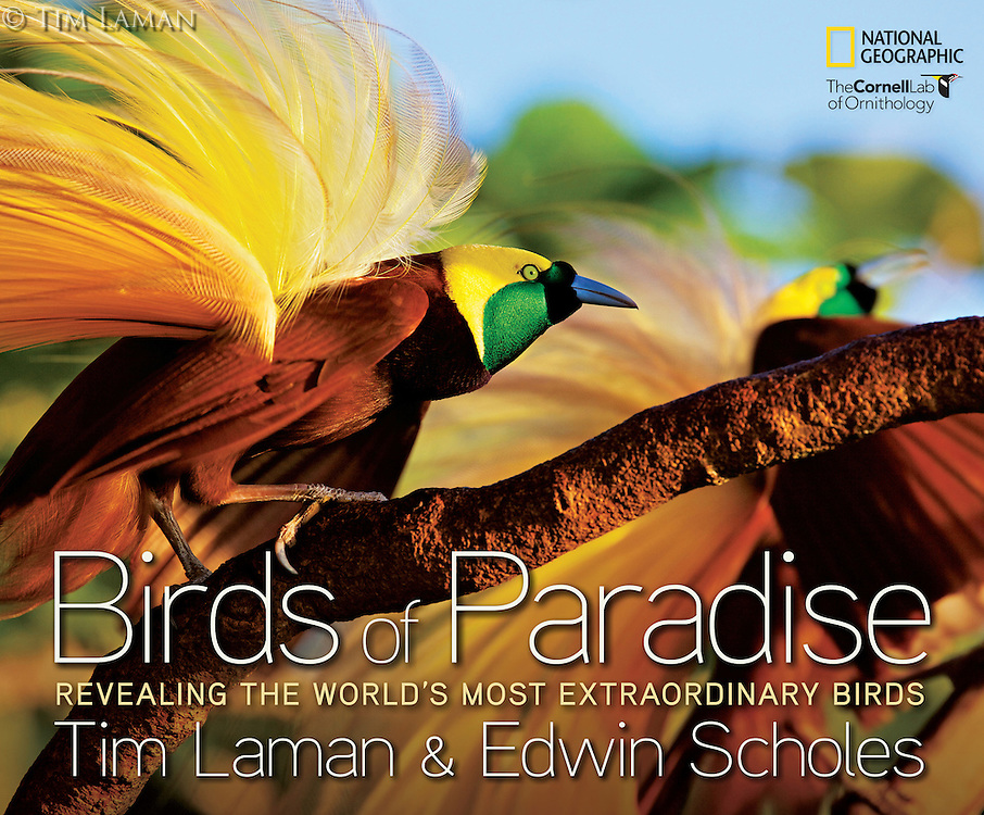 To purchase a signed copy of Tim's book: BIRDS OF PARADISE: REVEALING THE WORLD'S MOST EXTRAORDINARY BIRDS please visit our Fine Art Store with the link above.<br />