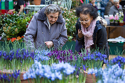 © Licensed to London News Pictures. 14/02/2017. London, UK. Members of the public browse the RHS Early Spring Plant Fair where exhibitors showcase their flora at Lindley Hall, London. Some exhibitors are previewing designs for Show gardens at this years Chelsea Flower Show. Photo credit : Tom Nicholson/LNP