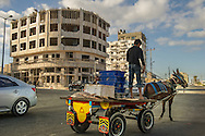 In the Gaza Strip, freshly caught fish are brought to market on a donkey cart. Fishing is a big part of the Gaza economy.