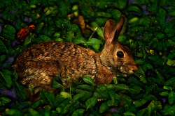 This shot of this beautiful bunny rabbit was taken on a gorgeous summer day at the Saint Louis Zoo.