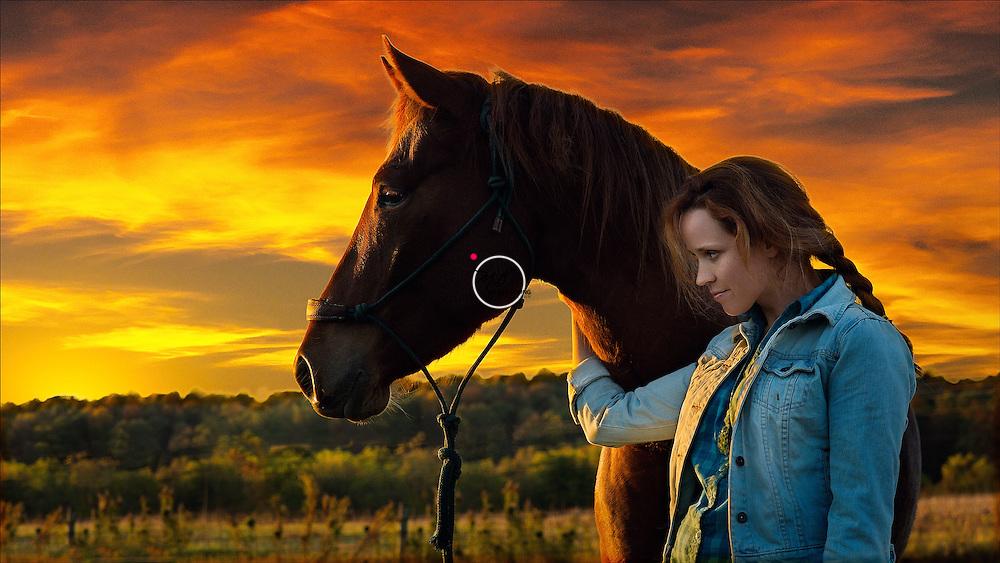 Sarah's War Horse