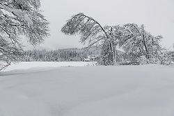 THEMENBILD - umgeknickte Bäume durch die hohe Schneelast, aufgenommen am 10. Jänner 2019, Kitzbuehel, Oesterreich // bent trees due to the high snow load at Kitzbuehel, Austria on 2019/01/10. EXPA Pictures © 2019, PhotoCredit: EXPA/ Stefan Adelsberger