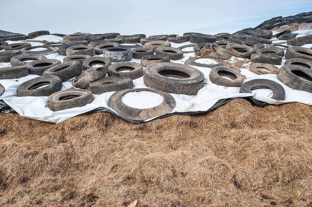 Mound of silage covered with a tarp and tires in Ridgely Maryland