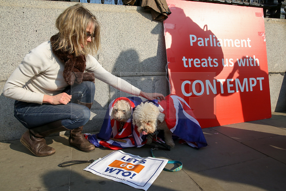 © Licensed to London News Pictures. 28/03/2019. London, UK. A pro-Brexit demonstrator with with couple dogs wrapped in Union Jack flags protest outside the Houses of Parliament. British Prime Minister Theresa May will seek a third vote on her Brexit deal on Friday 29 March 2019, subject to The Speaker, John Bercow's approval.  Photo credit: Dinendra Haria/LNP