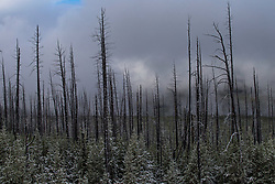 October 7, 2018 - Yellowstone, WY, United States - The leaves change color, the air turns cold, the animals prepare for another long winter and in the mountains, snow begins to fall. This is one of the least busy times to visits Yellowstone National Park. Many hotels and restaurants close in October and the 2,219,789 acres of National Park, grows alive with rich landscape and wildlife. (Credit Image: © Chris Rusanowsky/ZUMA Wire)