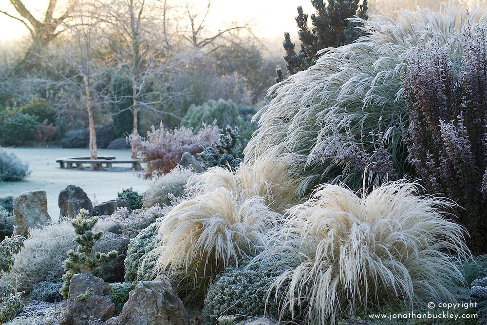 A frosty winter's morning on the rock garden in John Massey's garden. Stipa tenuissima in the foreground.