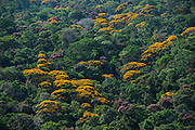 Rainforest Canopy<br /> Kupinang region<br /> GUYANA<br /> South America