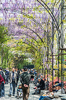 Shanghai, China - April 7, 2013: people walking and and relaxing in wisteria lane in fuxing park at the city of Shanghai in China on april 7th, 2013