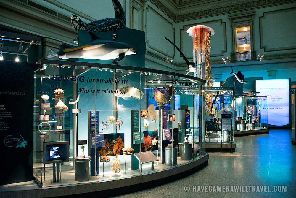 Exhibits At The Smithsonian Museum Of Natural History