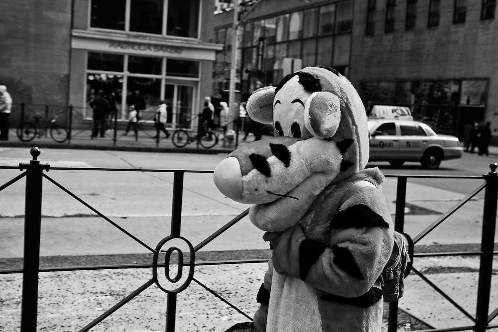 A tiger walks up 6th Avenue in Manhattan.