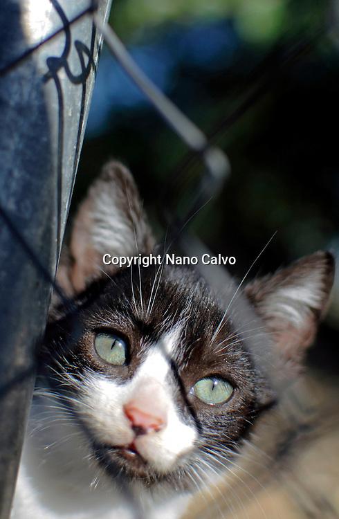Portrait of tender alley kitten