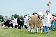 The Angus Show, Brechin, Saturday 8th June, 2013. Overall show champ leads the parade of stock
