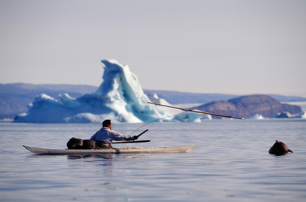 Inuit narwhal hunter Mamarut Kristiansen just throwing his harpoon from his kayak, Qaanaaq, Greenland, Qaanaaq, NW, Geenland